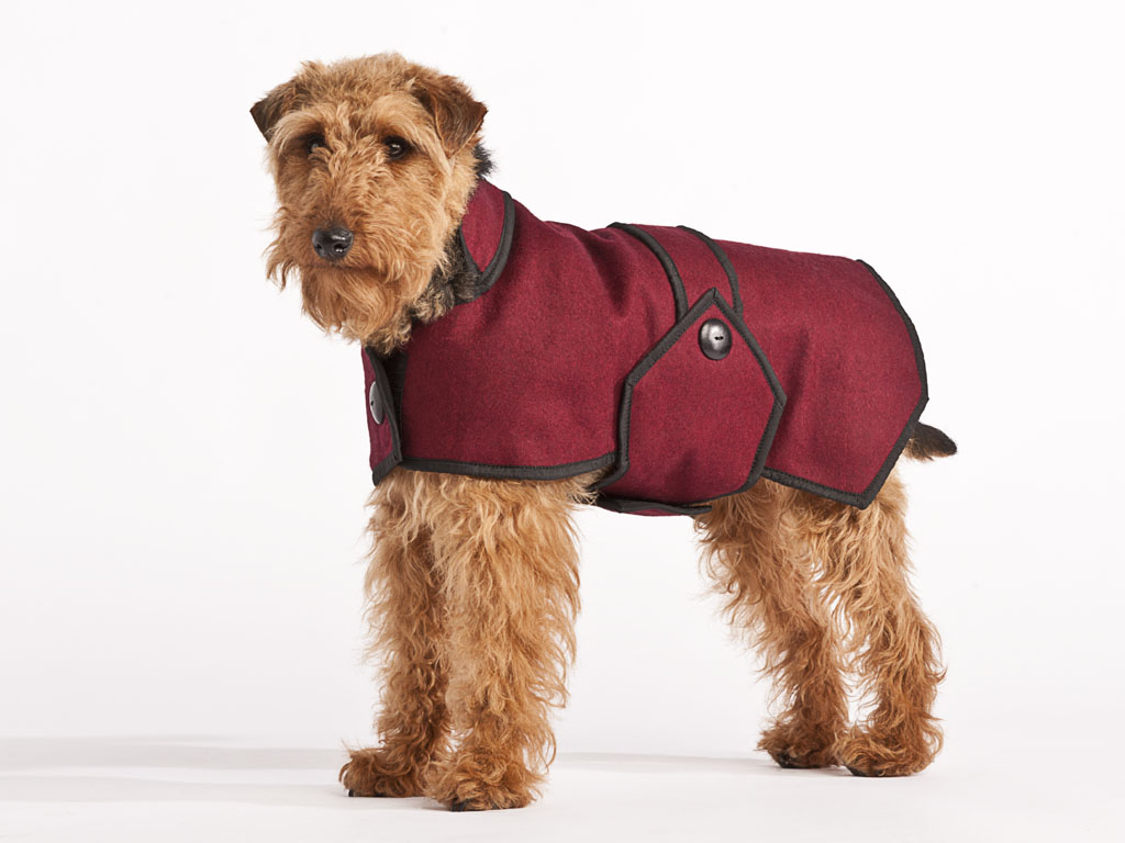 Dog In Coat photo - 1