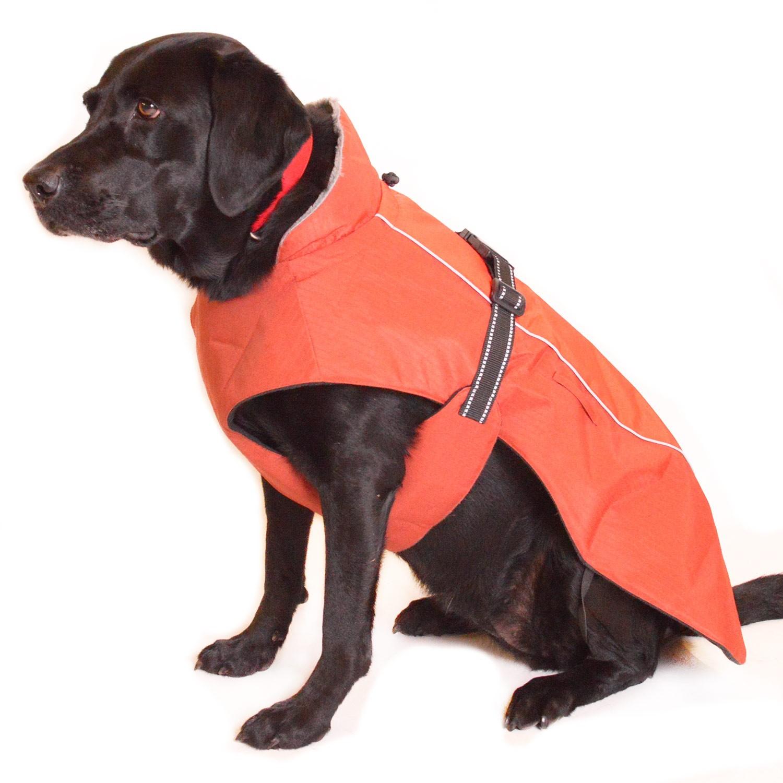 Dog In Jacket photo - 1
