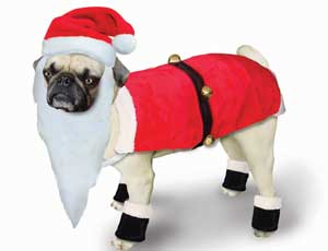 Dog In Santa Outfit photo - 1