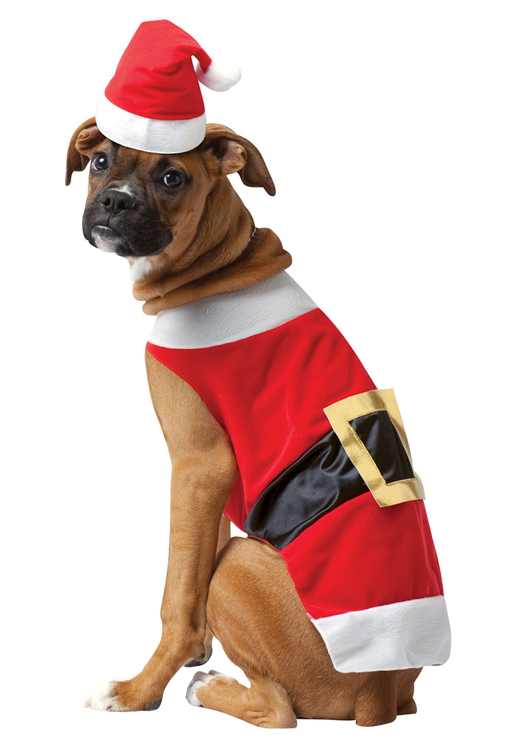 Dog In Santa Outfit photo - 3
