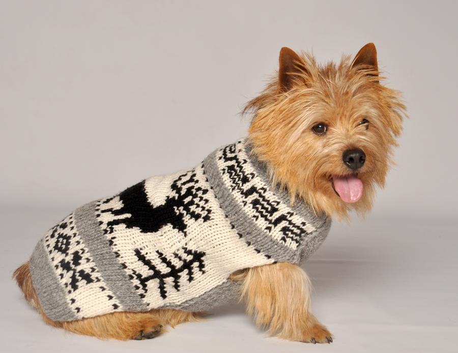 Dog In Sweater photo - 2