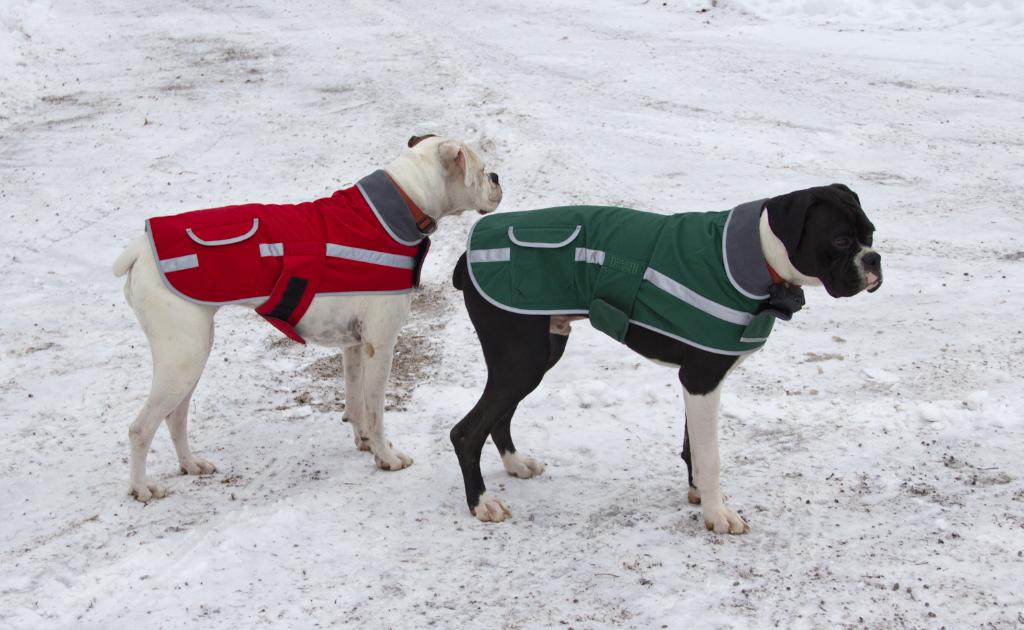Dog Jackets For Boxers photo - 1