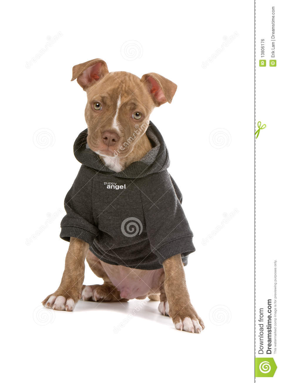 Dog Jackets For Pitbulls photo - 2