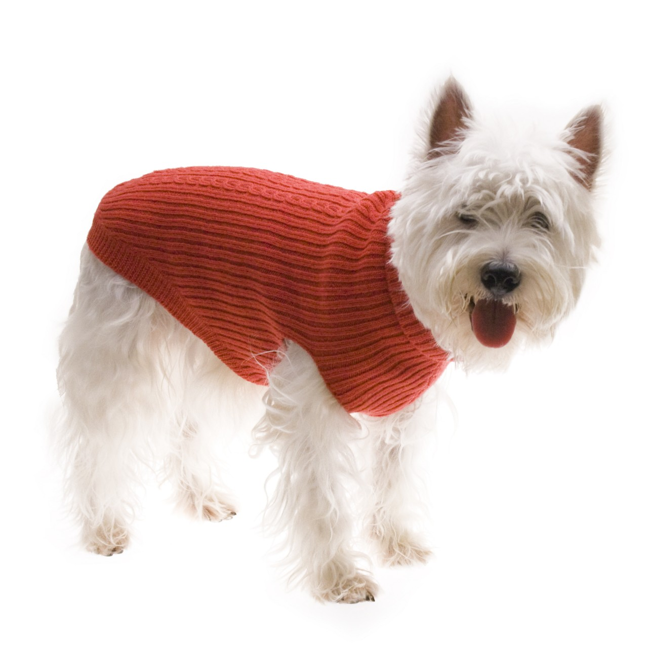 Dog Jumper photo - 1