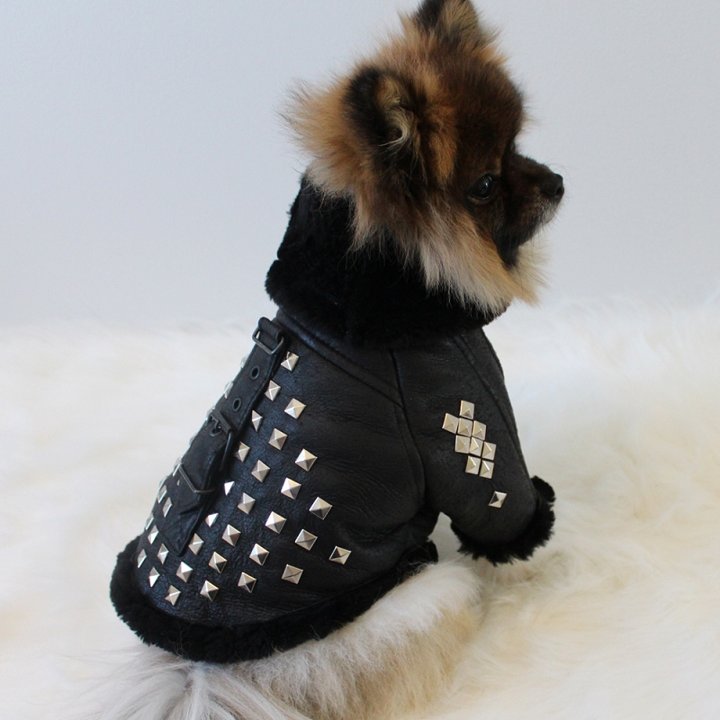 Dog Leather Jackets photo - 1