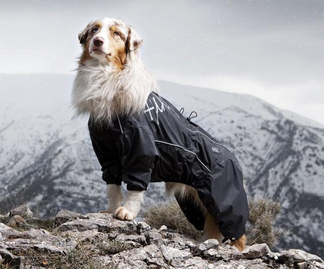 Dog Overalls photo - 1