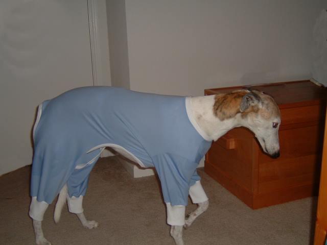 Dog Pajamas For Large Dogs photo - 1