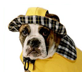 Dog Rain Hat photo - 1
