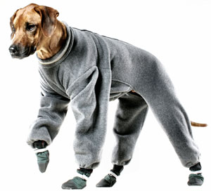 Dog Raincoat And Boots photo - 2