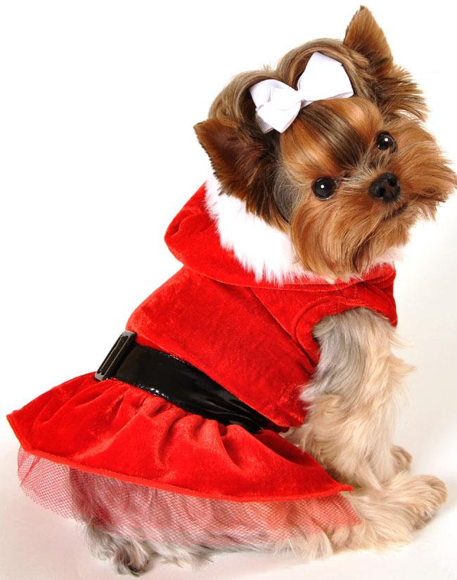 Dog Santa Dress photo - 3