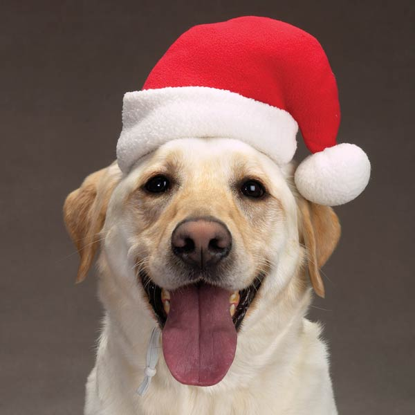 Dog Santa Hat photo - 1