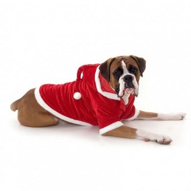 Dog Santa Outfit photo - 1