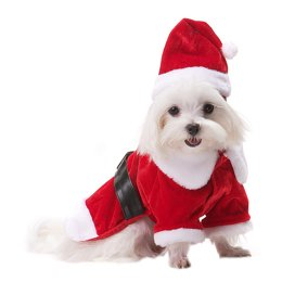 Dog Santa Suits photo - 2