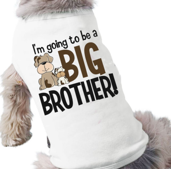 Dog Shirt Big Brother photo - 1