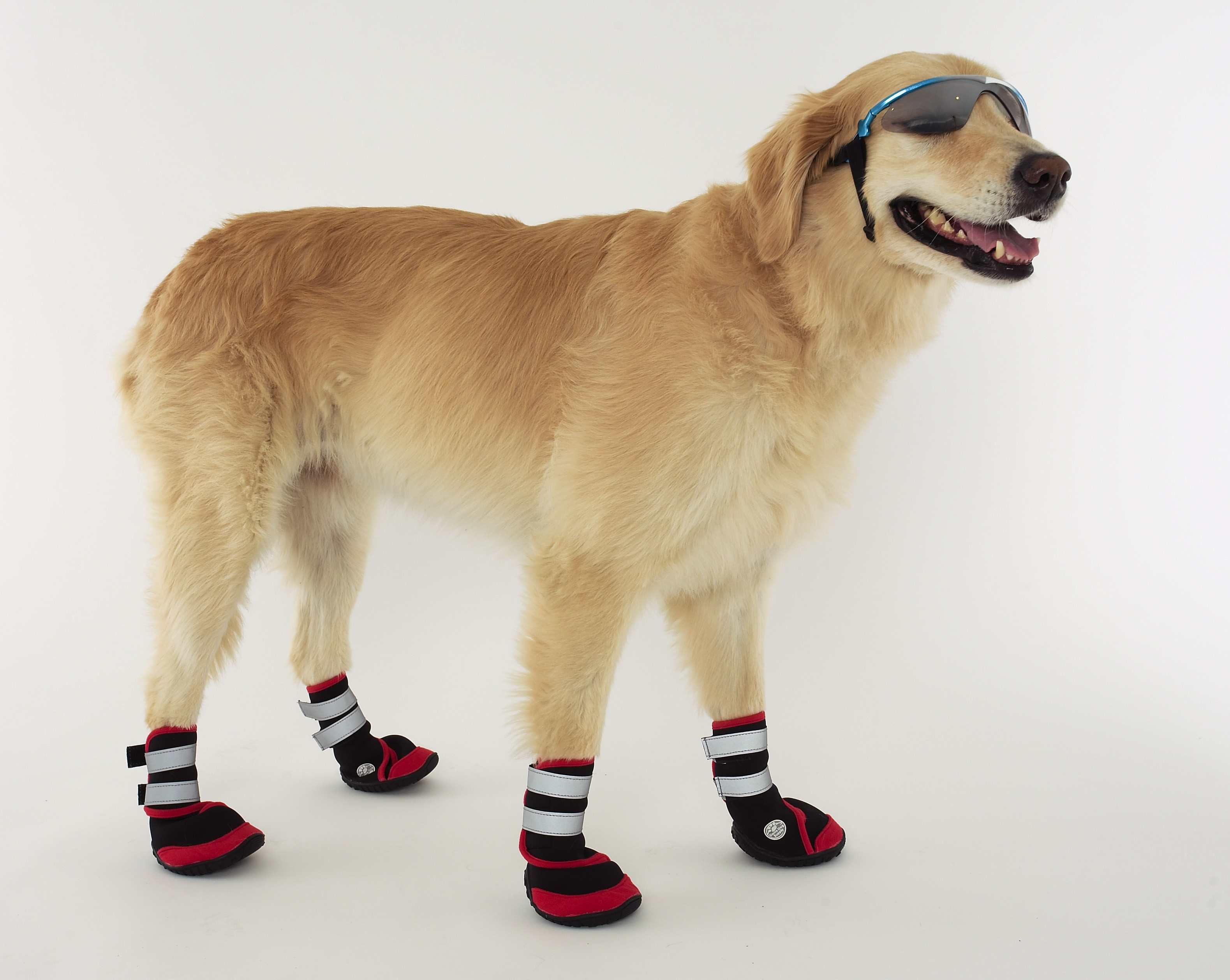 Dog Shoes photo - 1