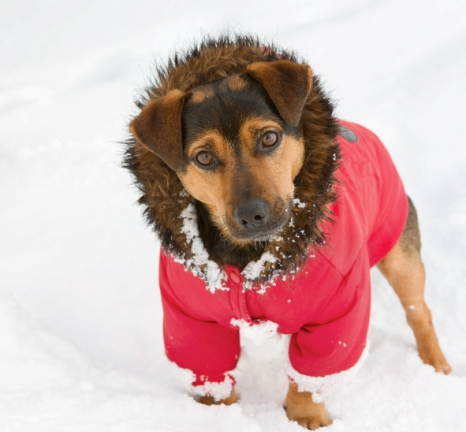 Dog Snow Coat photo - 1