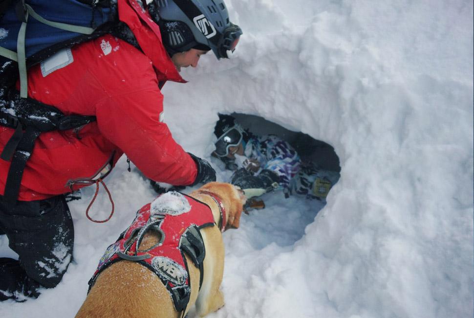 Dog Snow Gear photo - 1