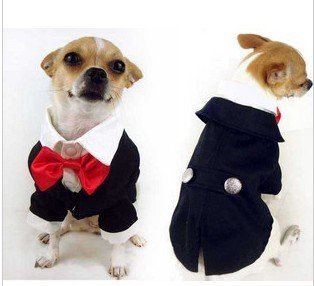 Dog Suit For Wedding photo - 1