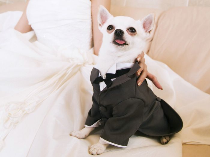 Dog Suit For Wedding | Dress The Dog - clothes for your pets!