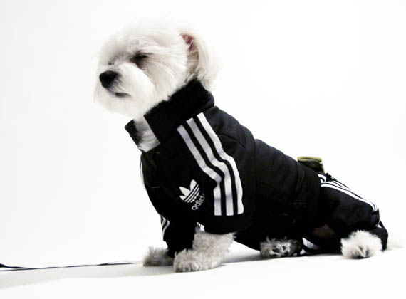 Dog Sweat Suits photo - 1