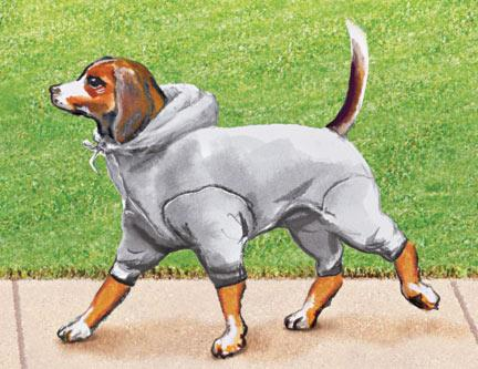 Dog Sweat Suits photo - 2