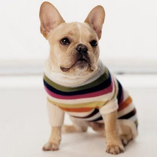 Dog Sweaters For Bulldogs photo - 1