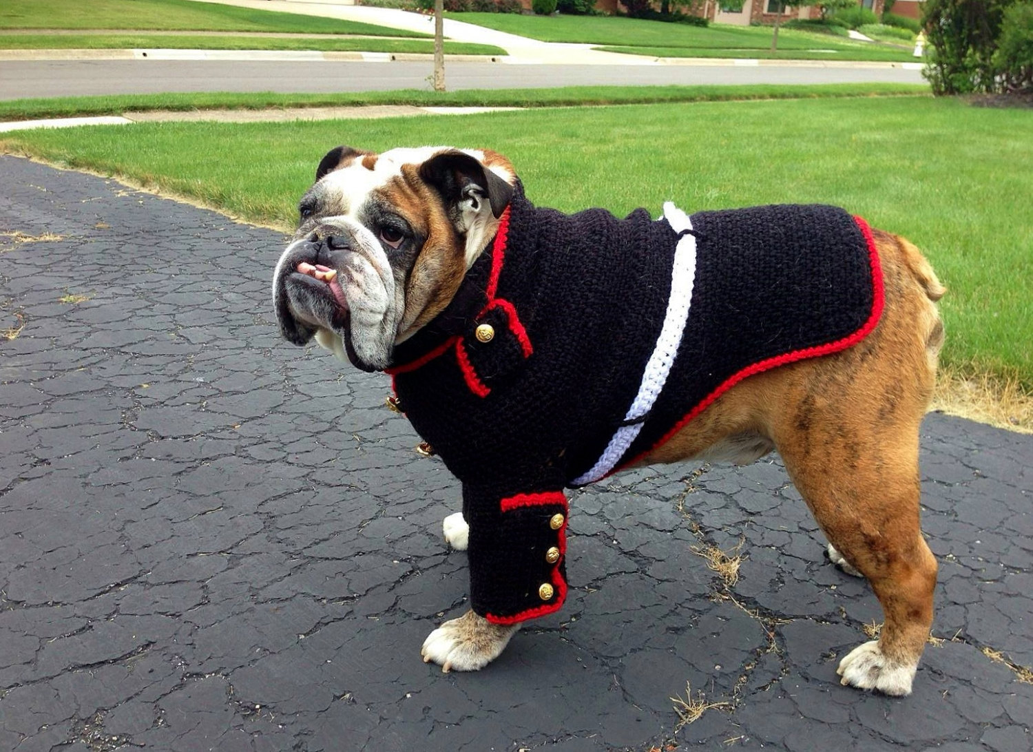 Dog Sweaters For Bulldogs photo - 3