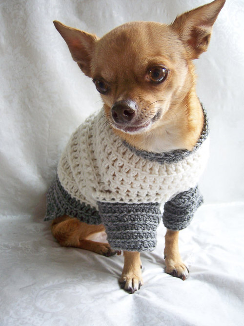 Dog Sweaters For Chihuahuas Dress The Dog Clothes For Your Pets