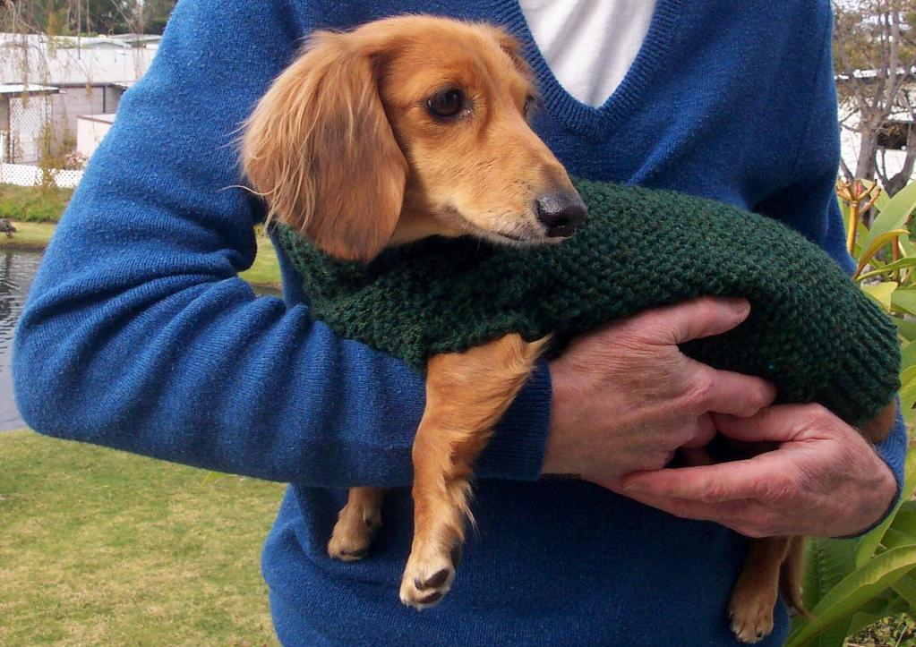 Dog Sweaters For Dachshunds photo - 2