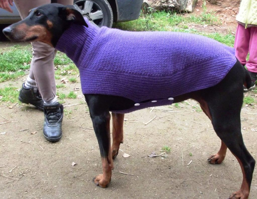 Dog Sweaters For Large Dogs photo - 1
