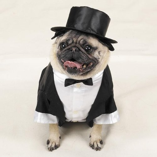 Dog Tuxedo Costume photo - 1
