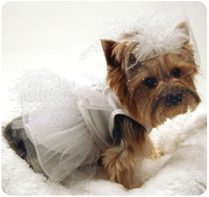 Dog Wedding Clothes photo - 1