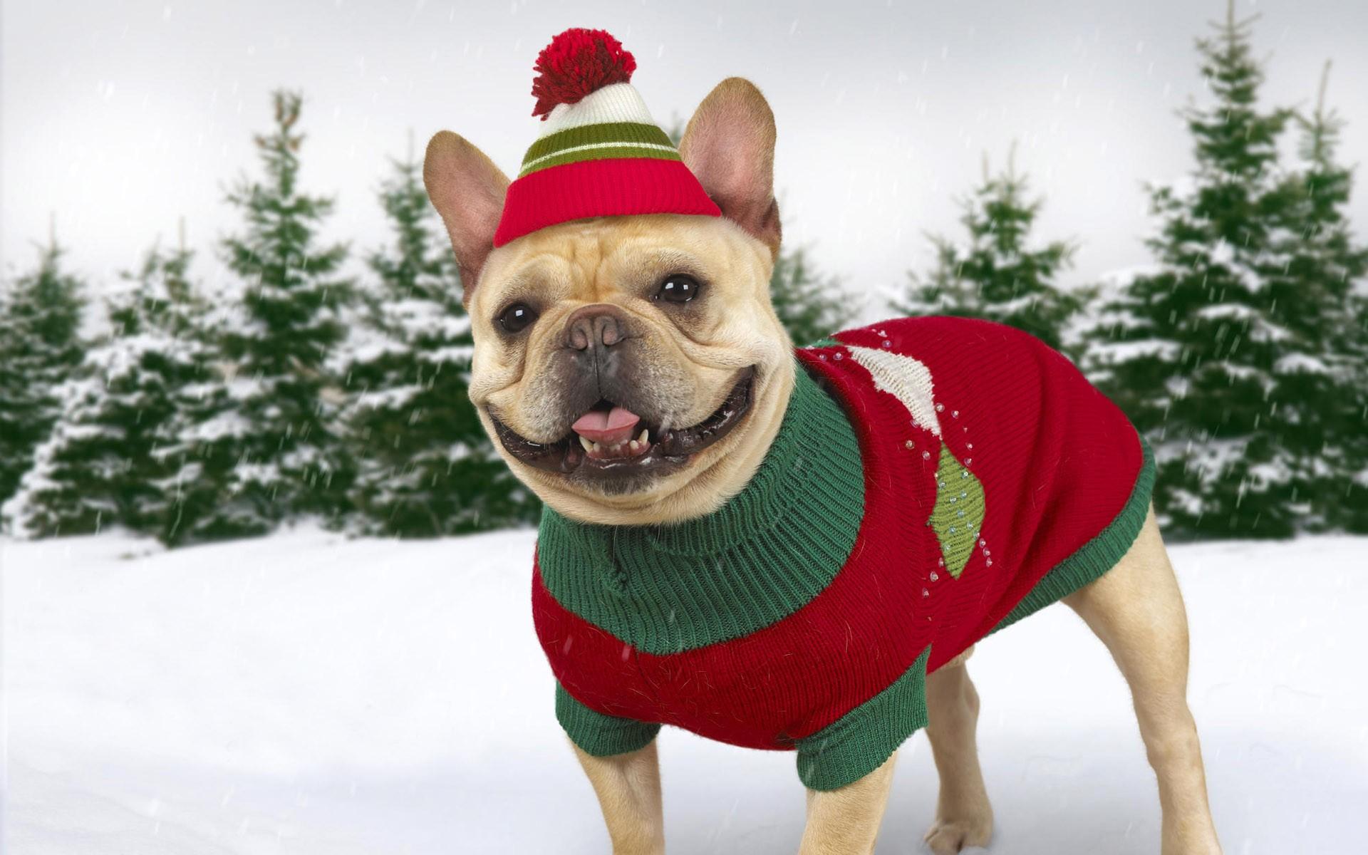 Dog Winter Clothes photo - 3