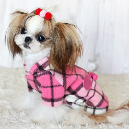 Dog With Clothes photo - 1