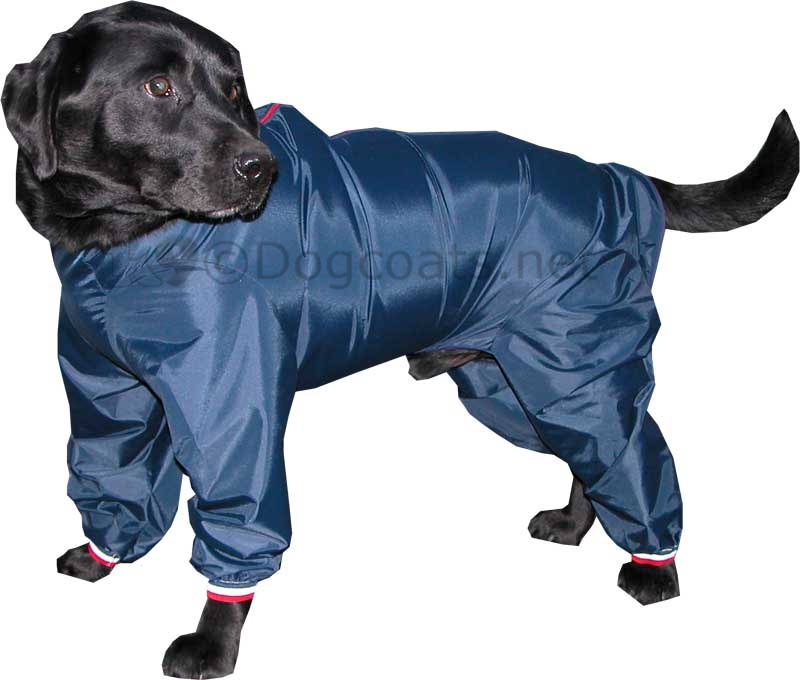 Dog With Coat photo - 1