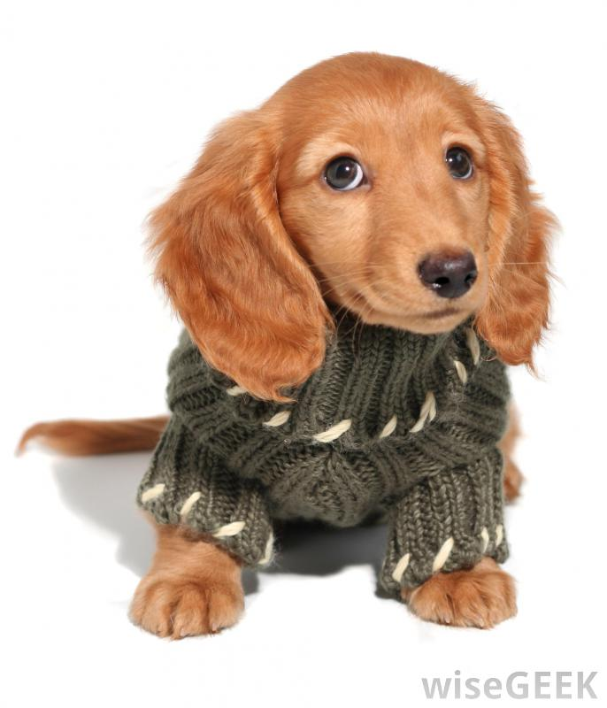 Dog With Sweater photo - 1