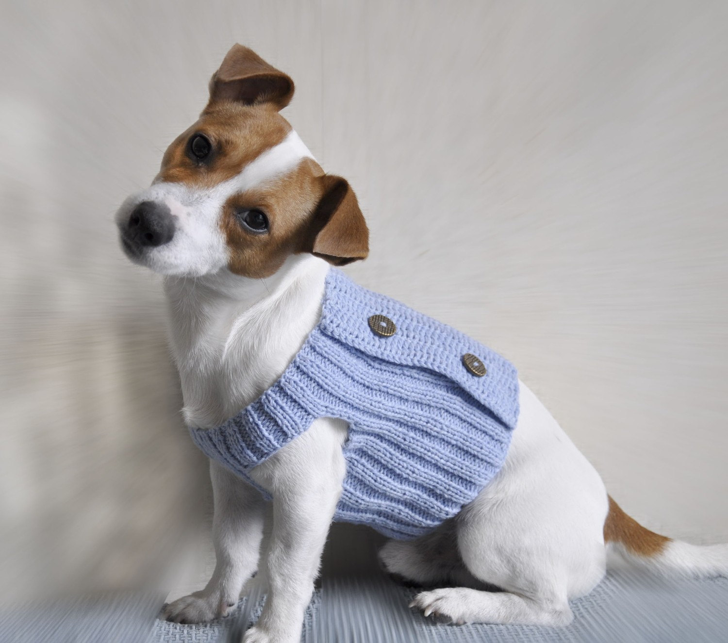 Dog With Sweater photo - 2