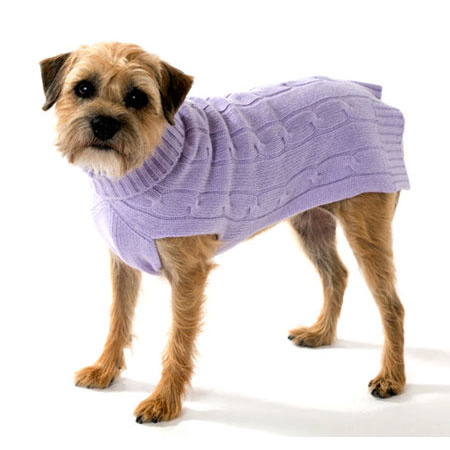 Dog With Sweater photo - 3