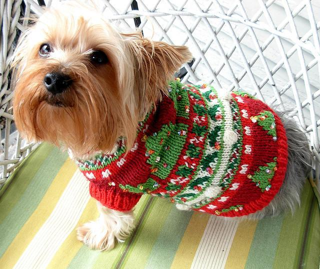 Doggie Christmas Sweaters photo - 1 - Doggie Christmas Sweaters –� Dress The Dog - Clothes For Your Pets!