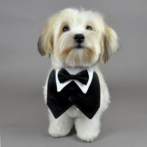 Doggy Tuxedo photo - 3