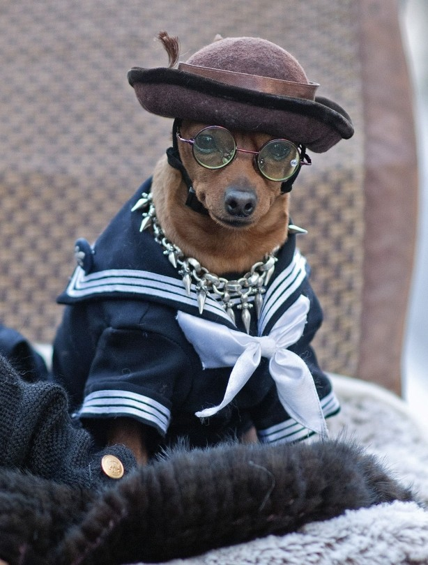 Dogs In Clothes photo - 1
