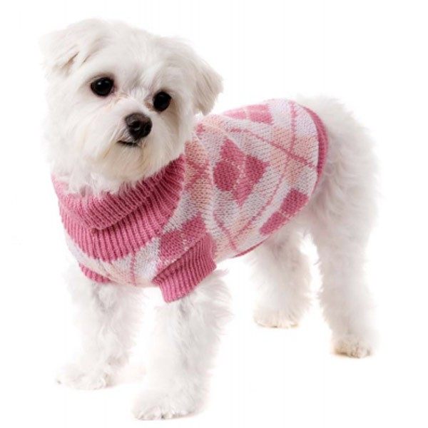 Dogs In Jumpers photo - 1