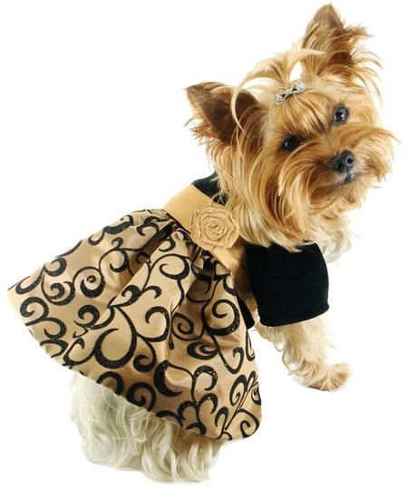 Dress A Pet photo - 1