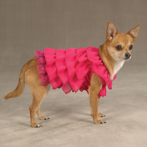 Dress For Puppy photo - 2