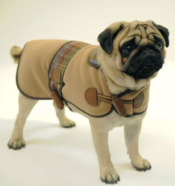 Expensive Dog Clothes photo - 1