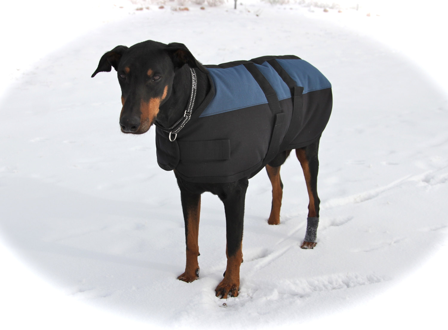 Extra Warm Dog Coats photo - 2