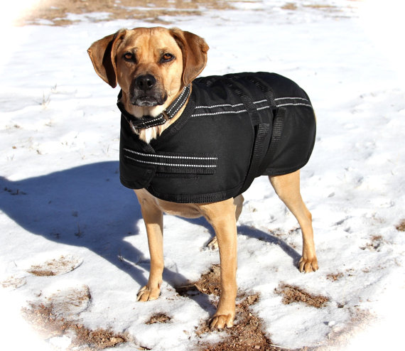 Extra Warm Dog Coats photo - 3