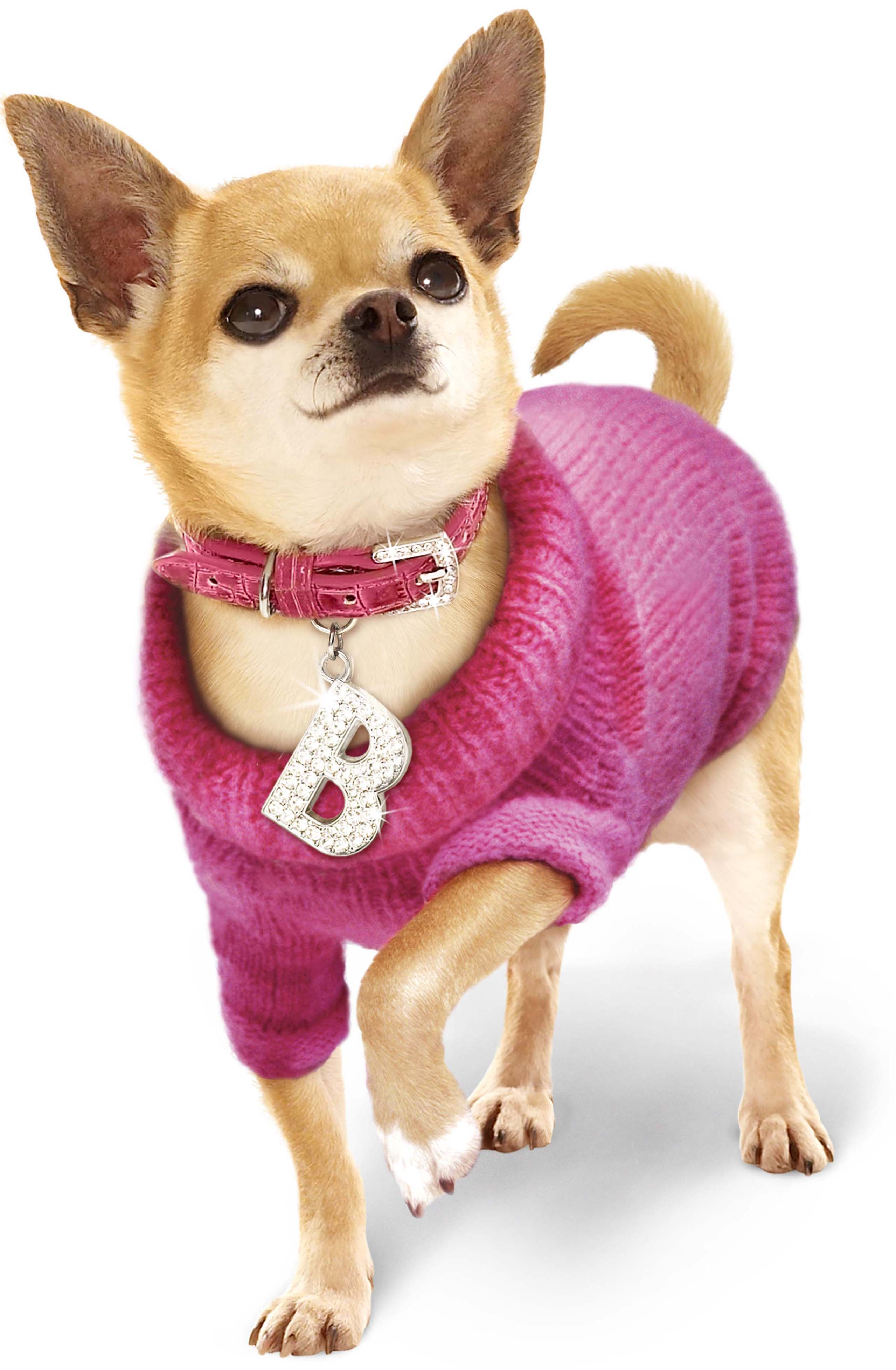 Fashion Dog Clothes photo - 1