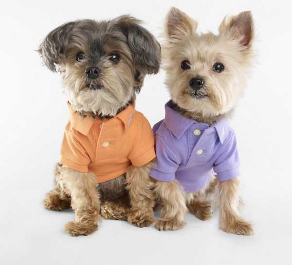 Fashion Pet Dog Clothes photo - 1