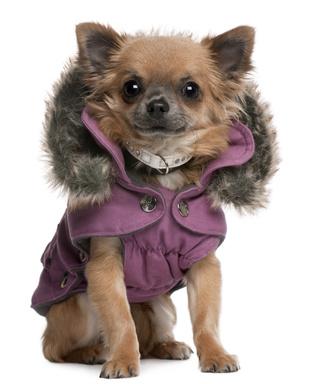 Fashionable Dog Coats photo - 1